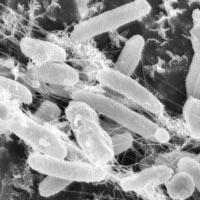 proeco bakterie